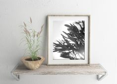 Minimal photography Nature Leaves photography Black and White Olive tree Photo print Greece print Minimal Romantic art print Grey Wall decor by LightBluePhotography on Etsy