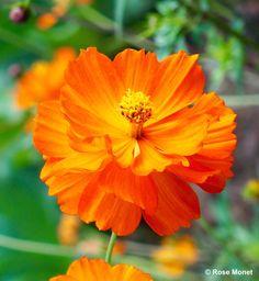OLYMPUS DIGITAL CAMERA #fleurs #bouquet