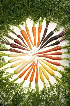 This is a pic of multi colored carrots I think it should be a shirt