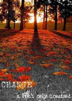 Autumn Sunrise, Germany - This looks like a perfect day Beautiful World, Beautiful Places, Beautiful Pictures, Nature Pictures, Fall Pictures, Beautiful Beautiful, Beautiful Morning, Fall Photos, Wedding Pictures