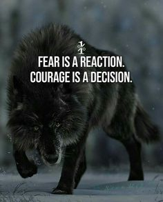 Motivational and Inspirational Thoughts, Inspiring Lines, Best Motivational Quotes to succeed in life, Life-changing Motivational Quotes, Qu. Lone Wolf Quotes, Lion Quotes, Wolf Qoutes, Wisdom Quotes, True Quotes, Great Quotes, Laugh Quotes, Awesome Quotes, No Fear Quotes