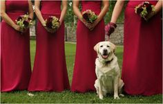 http://regalidacani.it/prodotto/wedding-with-dog/ #wedding #dog #Regalidacani #doglover #dogslife #love #party
