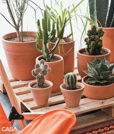 Quais São As Plantas Ideais Para áreas Internas?