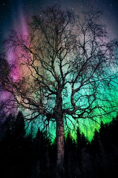 """Aurora Treealis"" ...  tree, aurora and stars l by Ilkka Hämäläinen on 500px Finland"