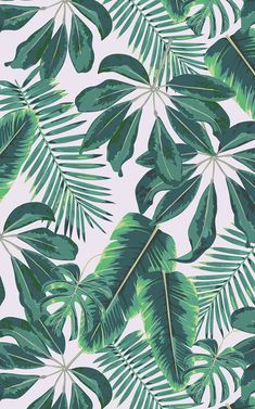 Tropical palm trees wallpaper Murals wallpaper - An atmospheric boho home office room with a real interior flair is inspired and created by these tr - Palm Tree Wallpaper Mural, Leaves Wallpaper Iphone, Whats Wallpaper, Plant Wallpaper, Tropical Wallpaper, Cute Wallpaper Backgrounds, Pretty Wallpapers, Aesthetic Iphone Wallpaper, Nature Wallpaper