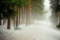 Foggy winters day