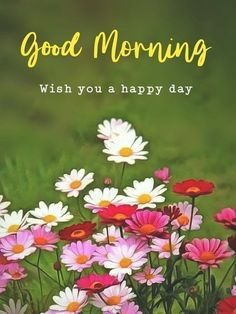 Good Morning Flowers Pictures, Good Morning Sunday Images, Good Morning Image Quotes, Good Morning Funny, Good Morning Picture, Good Morning Messages, Good Morning Greetings, Morning Pictures, Good Morning Wishes
