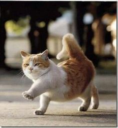 """* * """" Me be tryin; to goose-step, and woulds appreciate yoo notz watch me wif dat shizer grin on yer face!"""""""