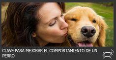 Descubre aquí el verdadero secreto para mejorar el comportamiento de un perro y así establecer una relación larga, duradera y feliz. Ingresa Aquí >>> http://sobreperrosygatos.com/mejorar-comportamiento-perro/