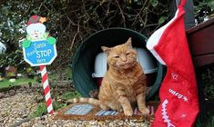 Cemetery Cat Named Barney, Who Comforted Mourners for Over 20 Years, Has Died
