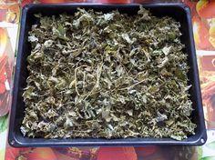 Готовим чай из листьев черной смородины