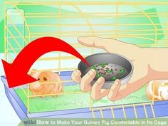 Image titled Make Your Guinea Pig Comfortable in Its Cage Step 10