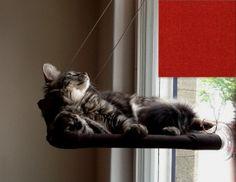 Window Perch
