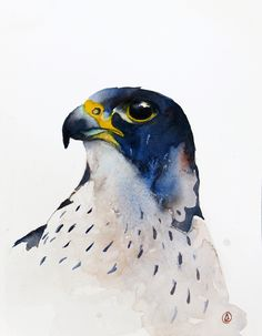 Portrait of the Peregrine falcon on Behance