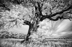 Long Exposure Infrared Photos of Trees
