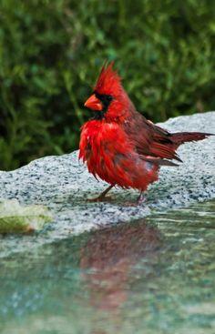~ birdy bathtime ~