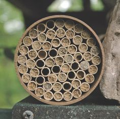 Backyard bee homes