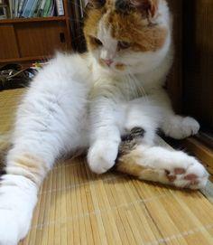 申し訳ありません 2 - http://iyaiyahajimeru.jp/cat/archives/63516