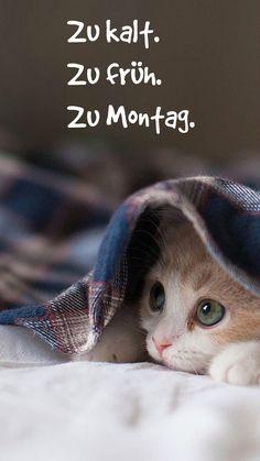 guten-morgen-bilder-kostenlos-montag-traurig-katze