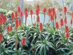 augustjordan Plants, Photos, Pictures, Plant, Planets