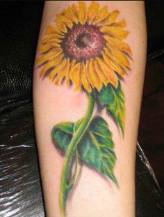 Single sunflower with stem