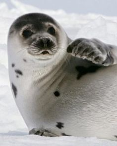 I want to be a seal biologist