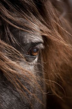 Wisdom ... www.frihetensarv.no, #frihetensarv, Hest, Ridetur, Solnedgang, Horse, Horsebackriding, Ranch, Sunset