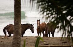 MAHOGANY HOUSE - Costa Rica Beach Vacation Rentals - Costa Rica Beach Vacation Rentals
