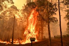 Australia fires: blazes 'too big to put out' as 140 bushfires rage in NSW and Queensland - Nexus Newsfeed Coast Australia, Queensland Australia, Australia Funny, Iconic Australia, Western Australia, Industrial Revolution In Europe, Australia Wallpaper, Australia Landscape, Head In The Sand
