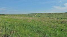 Canada.Alberta.(3)  08529 Cattle, Vineyard, Landscapes, Canada, Mountains, Travel, Outdoor, Scenery, Gado Gado