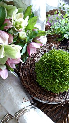 Hellebores and boxwood balls