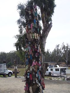Thong Tree #2 (the other one was full!) Echuca, Victoria, Australia