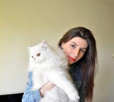 Persian cat, pet, family
