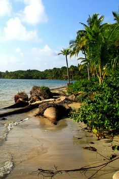 A Guide to the beaches on Colon Island in Bocas del Toro, Panama. What to expect and how to get to there.