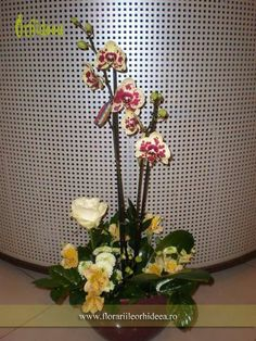 Orhidee Arlechin, Phalaenopsis Wreaths, Home Decor, Plant, Decoration Home, Door Wreaths, Room Decor, Deco Mesh Wreaths, Interior Design, Home Interiors