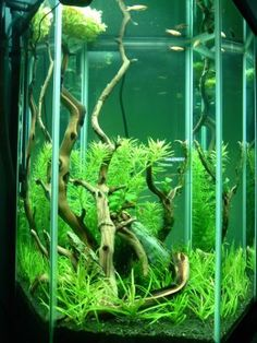 30 gal. Hex - Aquascaping - Aquatic Plant Central