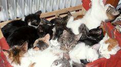Pétition · Les chats du refuge de l'île de Syros sont en danger : aidez-les ! · Change.org