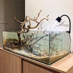 Aquarium made in VietNam Saltwater Tank, Saltwater Aquarium, Planted Aquarium, Home Aquarium, Aquarium Design, Aquascaping, Biotope Aquarium, Fish Tank Design, Amazing Aquariums
