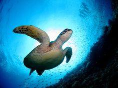 ダイビングに最適、生き物が数多く生息するベストビーチ第4位「新城海岸」