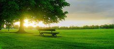 bench.jpg (1200×520)