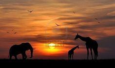 -Silhouette Elefanti E Giraffe Al Tramonto Foto Royalty Free, Immagini ...
