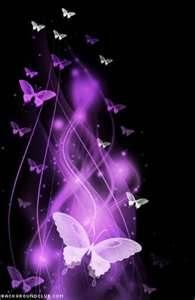 pictures of purple butterflies - Bing Images