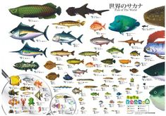 Fish - Animal Crossing Wiki
