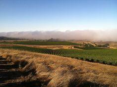 MacPhail Pratt Vineyard Pinot Noir - Enobytes Wine Online