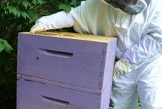 My Honey Bee Farming Project Year One - Backyard Beekeeping