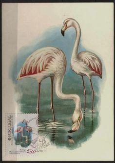 Aves naturais.