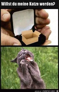 Start the day right! # animal mees # funny memes # cat memes memes animals 17 Funny Animal Memes That'll Make You Roar With Laughter - World's largest collection of cat memes and other animals Funny Animal Memes, Dog Memes, Funny Animal Videos, Cute Funny Animals, Funny Animal Pictures, Funny Cute, Funny Dogs, Funny Memes, Humorous Pictures