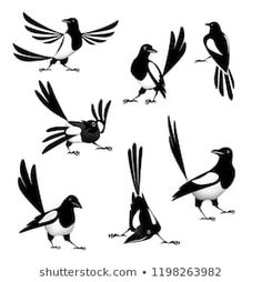 "Magpie Set of vector drawings ""Magpie"". Bird Drawings, Animal Drawings, Bird Doodle, Linocut Prints, Magpie, Vector Graphics, Japanese Art, Royalty Free Images, Character Inspiration"