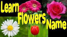 Image result for flowers name