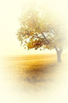 Tree of Life~ October Country, Fields Of Gold, Lone Tree, Creative Colour, Autumn Day, Fall, Indian Summer, Milk And Honey, Mellow Yellow